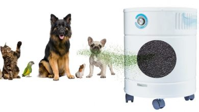 Photo of How Can an Air Purifier Help Your Pet?