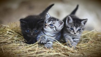 Photo of 5 Tips For Choosing Your Cat Breeds