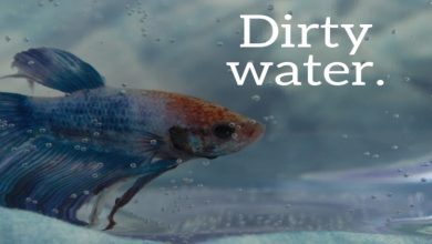 Photo of Why Do My Betta Fish Keep Dying – Explanation of Some Vital Reasons