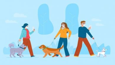 Photo of Interesting Facts I Bet You Never Knew About Dog Walking App Development