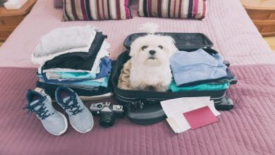 Photo of Basic Things You Need to Pack for a Pet Vacay!