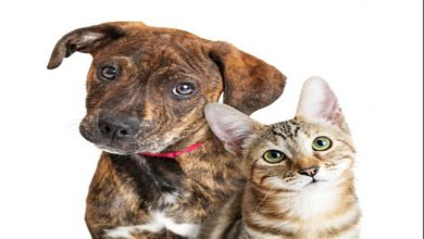 Photo of Are You a Cat Person or a Dog Person?